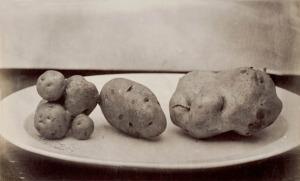 patate PITTURA 005